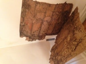 Termites in wall of bedroom - Geelong