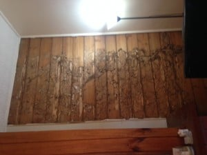 Termites in wall of lounge room - Geelong
