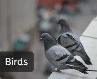 birds_btn