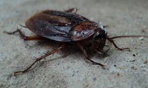 Roaches Control