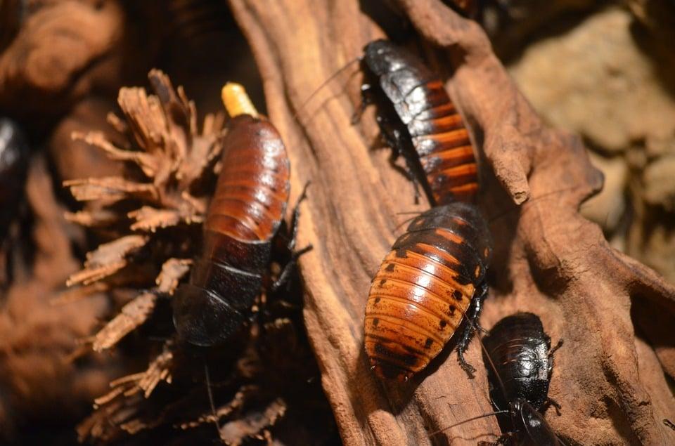 Control Roaches