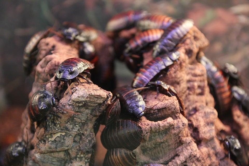 Roach Control Expert
