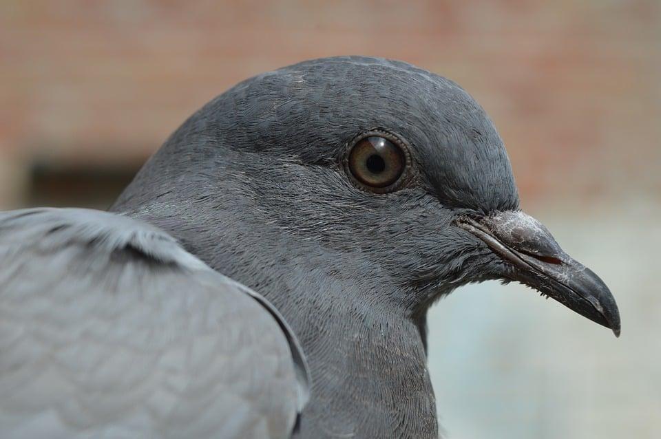 Bird Control Expert