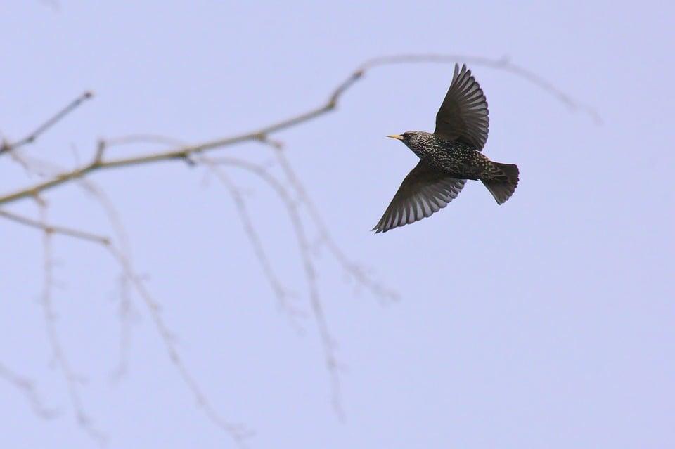 Residential Bird Control