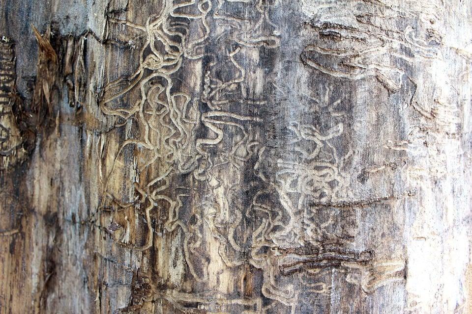 Control Termites
