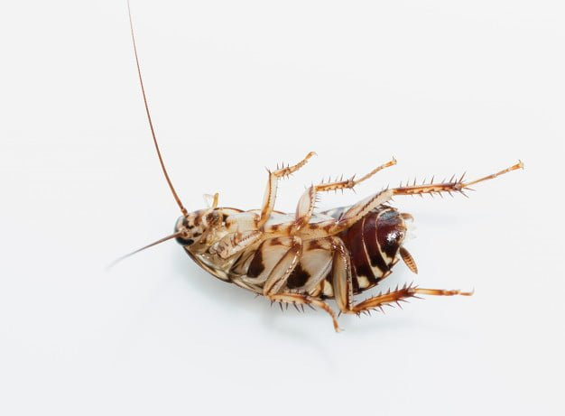 Cockroaches Died
