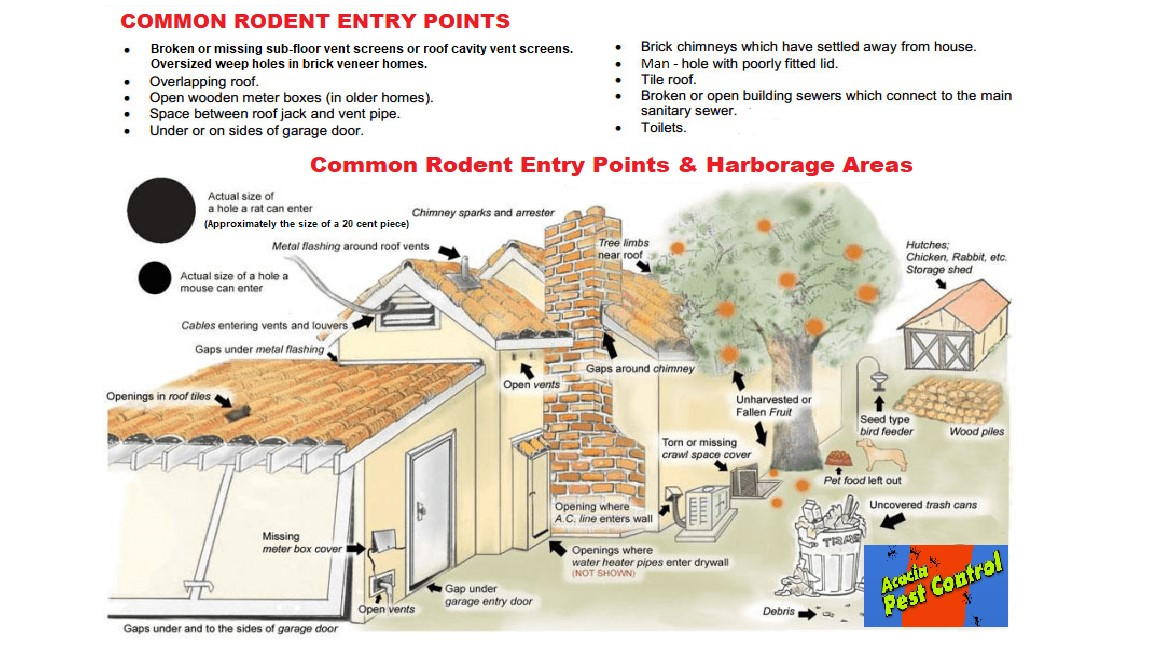 rodent entry points