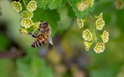 Commercial & Residential Bee Control
